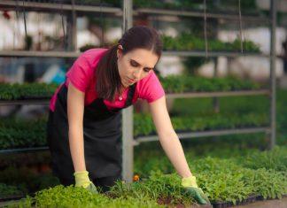 produkty dla profesjonalnych growerow